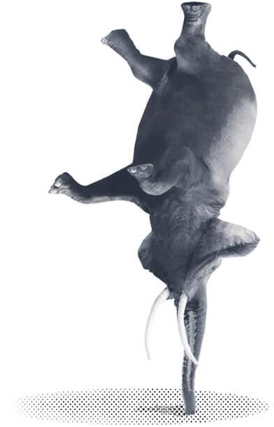 Elephant on its Head
